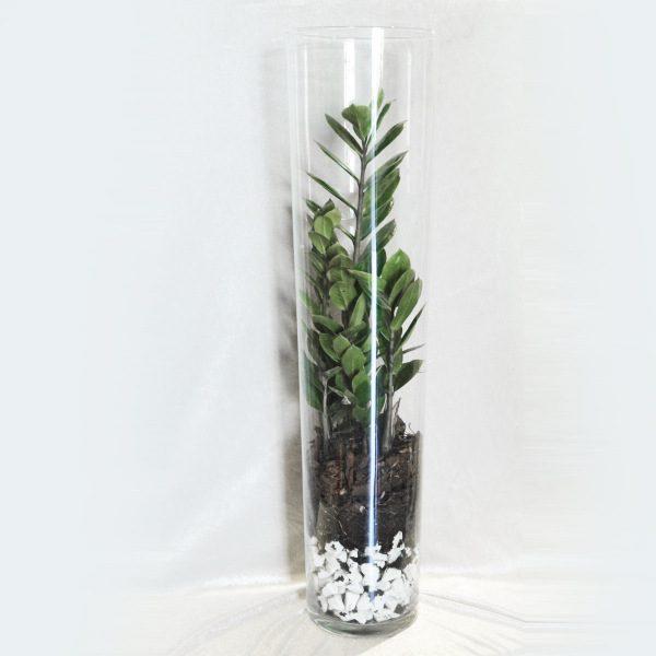 Pianta verde in vaso di vetro masciandaro fiori e piante for Pianta da pavimento verde