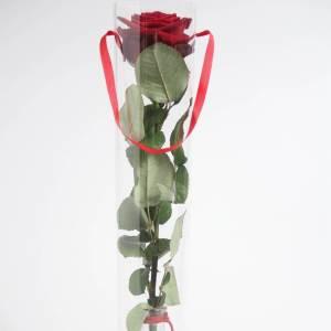 rosa singola.jpg1